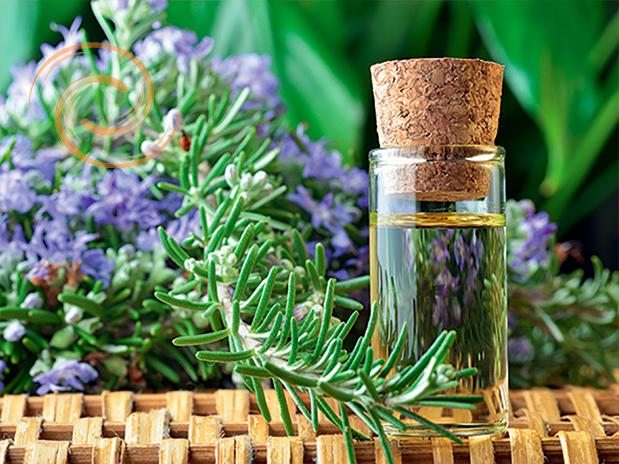 Apport des huiles essentielles et de l'aromathérapie
